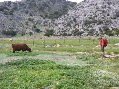 Manolo se entiende con las vacas y con las ranas de la charca. foto: Eva Abascal